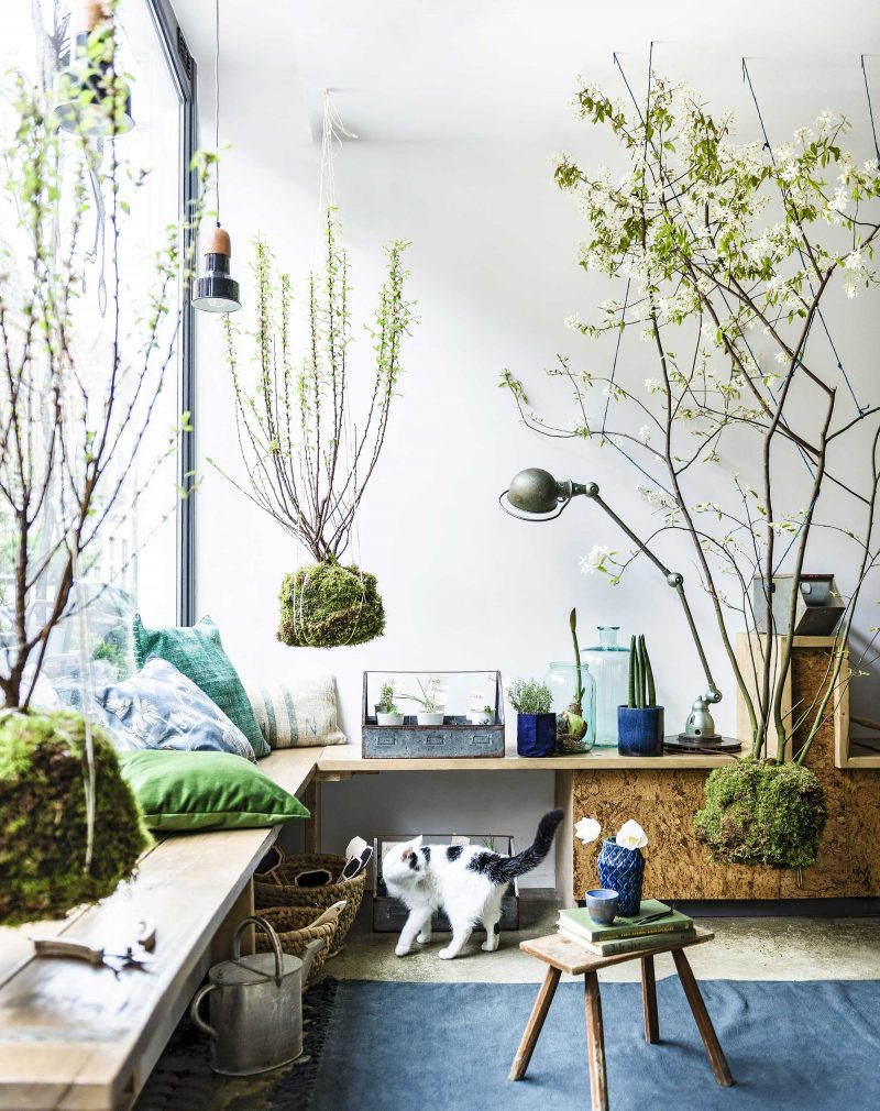 coin de salon lumineux avec des plantes suspendues au plafond