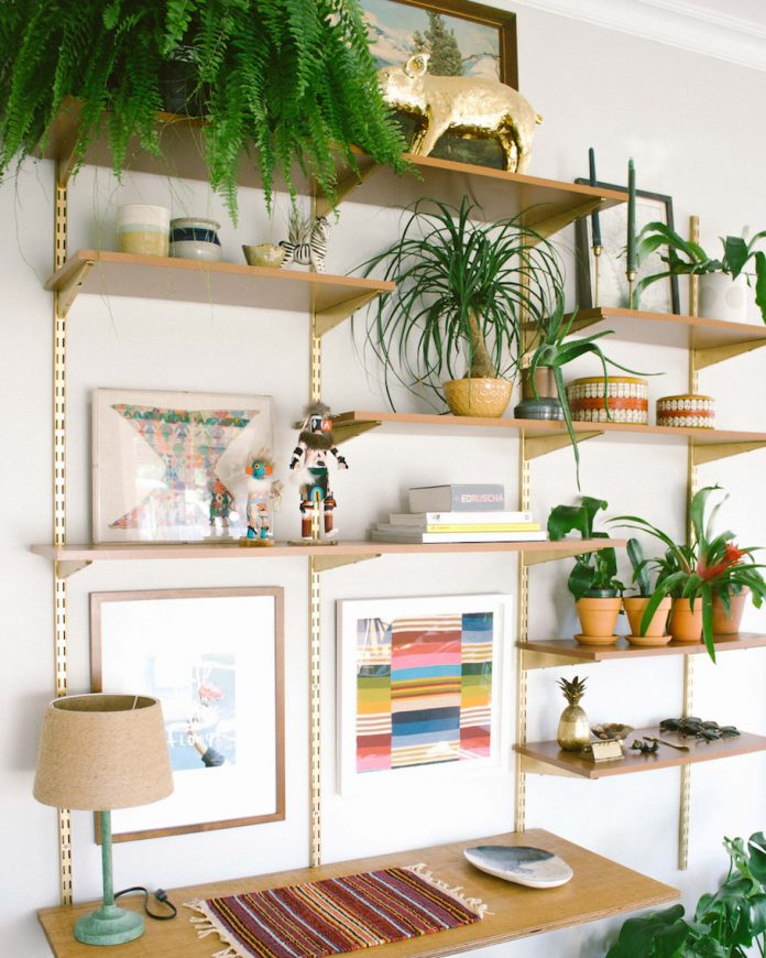 plantes vertes dans des pots de différentes tailles sur des étagères de bureau
