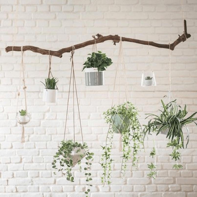 plantes vertes dans des pots clairs suspendus à un tronc d'arbre accroché au plafond avec des cordes
