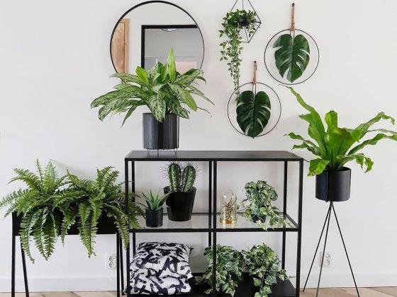 composition de plantes décoratives dans un hall d'entrée