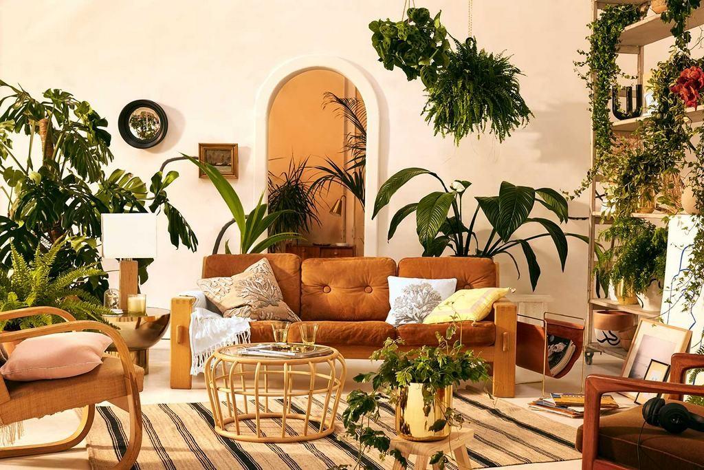 canape-ocre-chaises-vintages-et-plantes